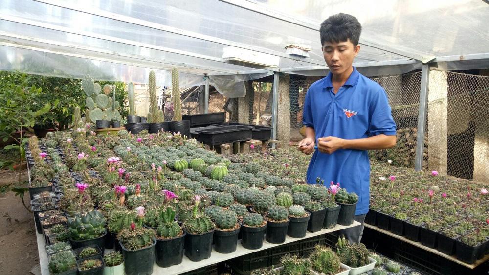 An Giang: Chàng nông dân 9X trồng loài cây chỉ có thân, hoa và gai, đăng chơi lên facebook, ai cũng muốn đến xem