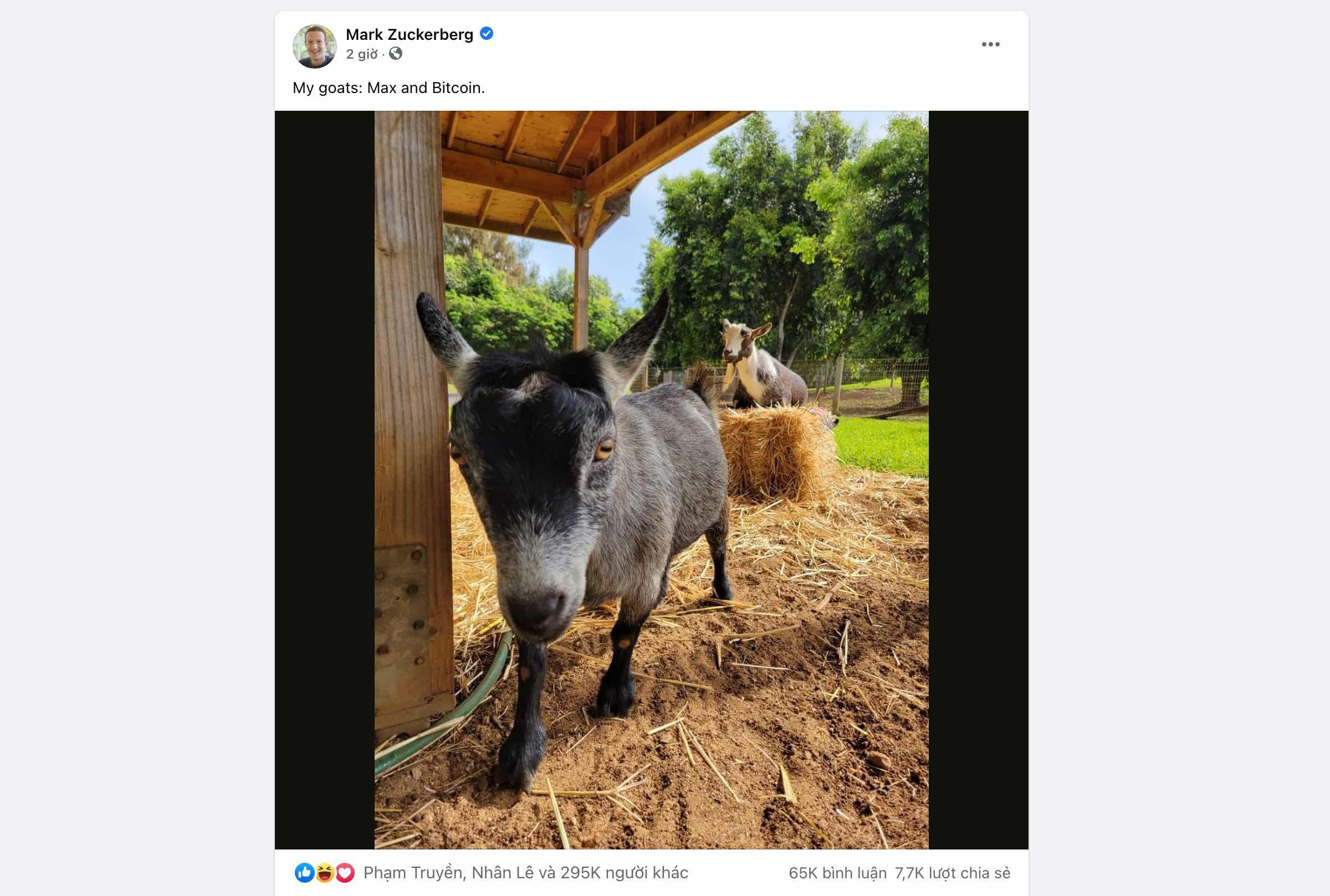 Người dùng Internet cắt nghĩa tên 2 con dê của CEO Facebook