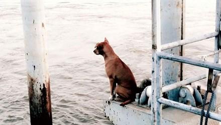 'Cô chó' chờ chủ gây sốt cộng đồng mạng Thái Lan
