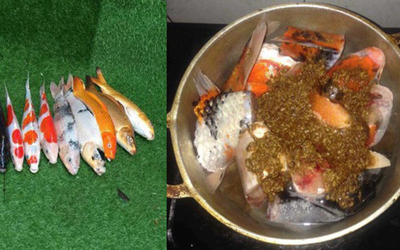 Chàng trai Đà Nẵng gây sốc cộng đồng mạng khi dùng cá Koi đắt tiền nấu ăn