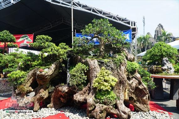 """Cả ngàn """"người mẫu"""" chân dài chân ngắn bonsai đang khoe sắc ở Sài Gòn"""