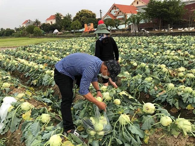 Hàng trăm tấn nông sản tồn đọng trong tâm dịch Covid-19, cộng đồng mạng kêu gọi giải cứu