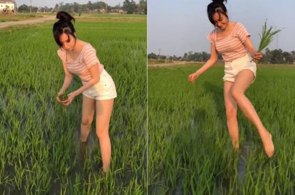 Hot girl bị chê ăn mặc hớ hênh đi cấy lúa hóa ra là người quen showbiz