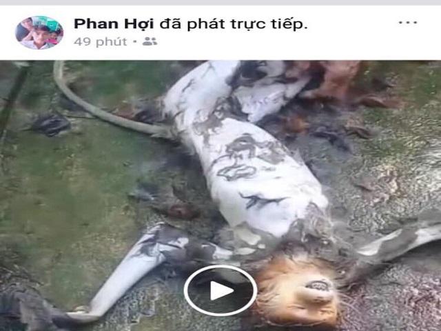 Livestream cảnh làm thịt khỉ ăn óc gây phẫn nộ cộng đồng mạng