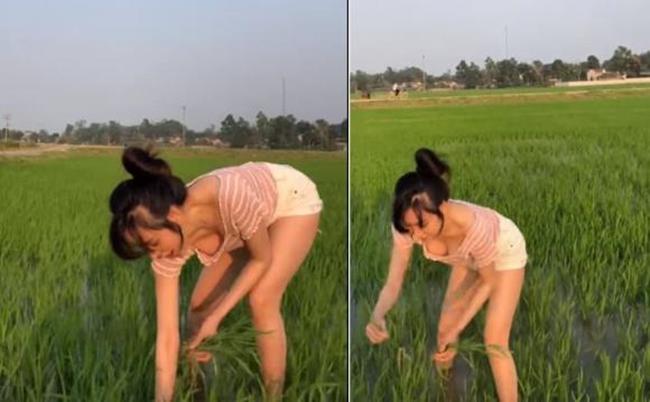 Hot girl xứ Nghệ mặc áo cổ rộng mênh mang hớ hênh đi cấy lúa chưa hot bằng mẫu Tây này!