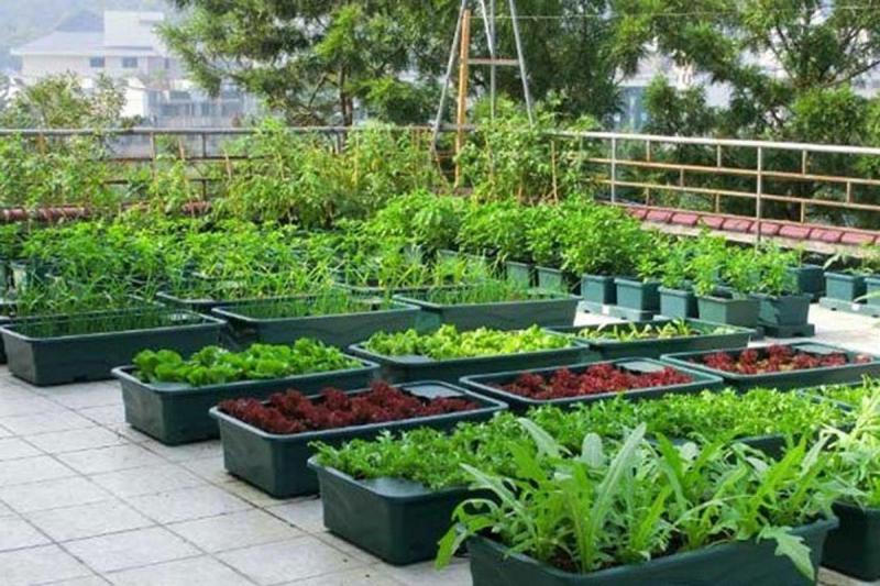 Top 10 Bài văn tả vườn rau hay nhất