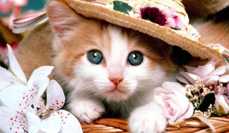 Top 10 Dàn ý bài văn thuyết minh về con vật nuôi mà em thích chi tiết nhất