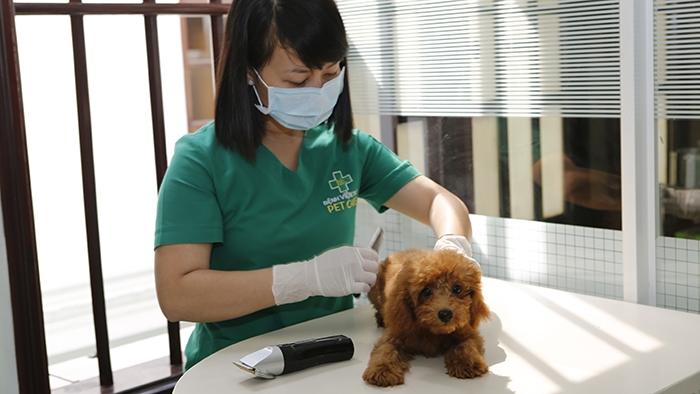 Top 7 Phòng khám thú y ở Vũng Tàu uy tín và chuyên nghiệp nhất