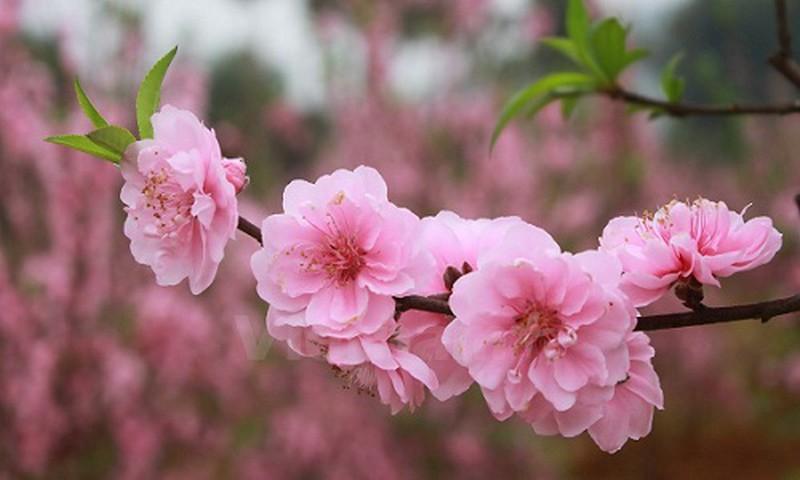 Top 15 Loài hoa chơi Tết đáng mua và đẹp nhất hiện nay