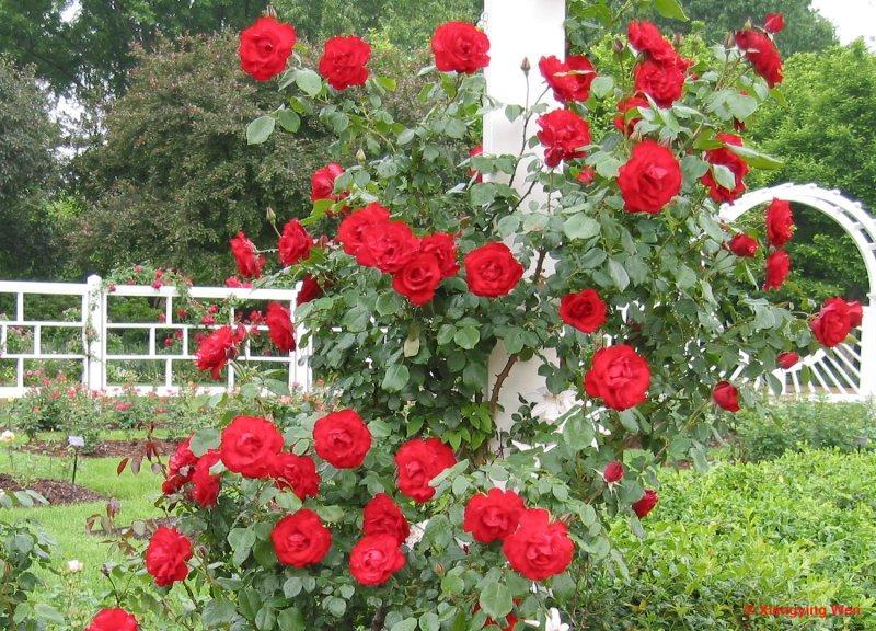 Top 12 Dàn ý bài văn tả cây hoa chi tiết nhất