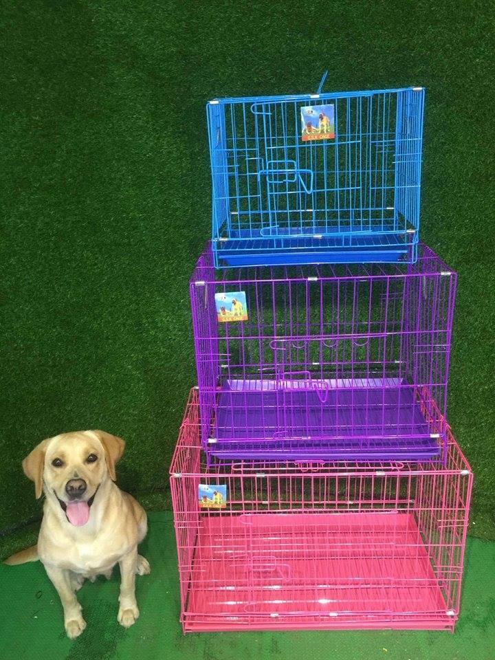 Top 7 Shop bán phụ kiện cho thú cưng uy tín và chất lượng ở Hải Phòng