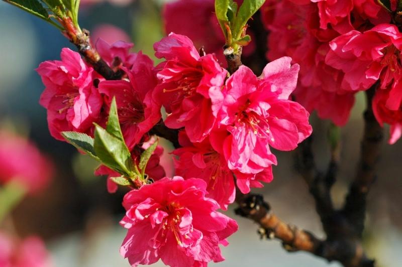 Top 18 Loài hoa mang lại may mắn và tài lộc cho gia chủ trong năm mới