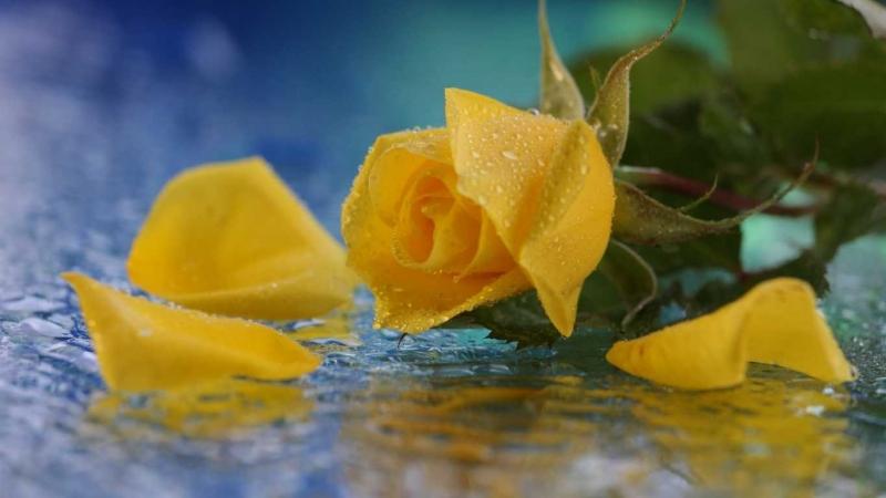 Top 15 Loài hoa tượng trưng cho tình bạn