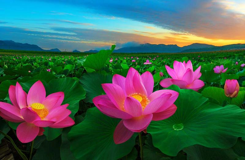 Top 12 Loài hoa đẹp nhất Việt Nam