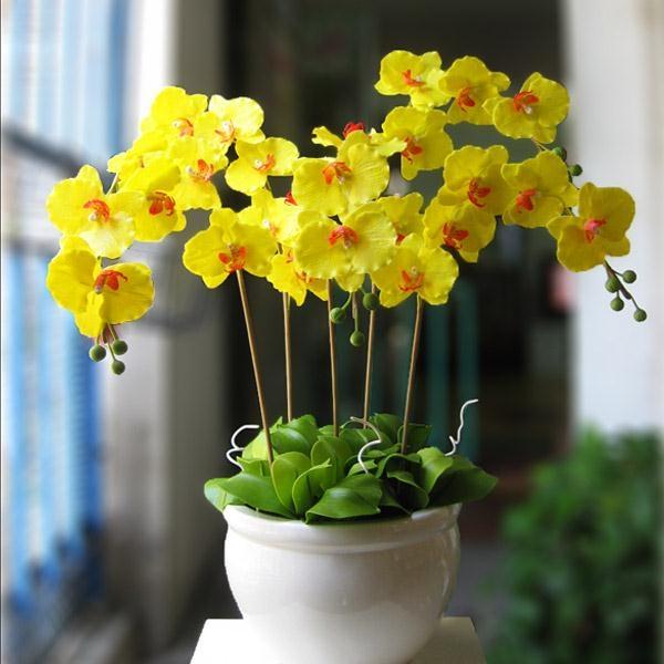 Top 11 Địa chỉ bán hoa lan hồ điệp đẹp nhất tại TP.HCM