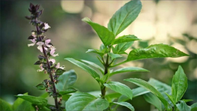 Top 13 Cây trồng sẽ có hương thơm nhất, sạch cửa, mát nhà