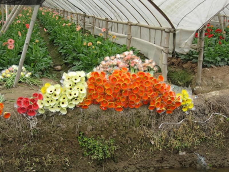 Top 12 Làng hoa nổi tiếng quanh Hà Nội