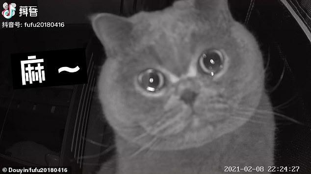 Quá bơ vơ vì chủ nhân bỏ lại một mình, mèo cưng ngồi trước camera rơi nước mắt
