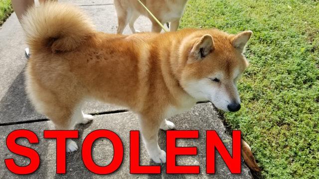 """Bị fan hâm mộ trộm chó, Youtuber treo thưởng gần 50 triệu đồng cho ai tìm được """"cậu vàng"""""""