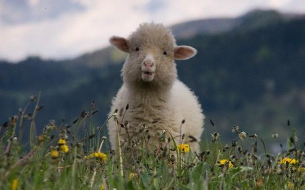 """Chúng ta đang bị Facebook, Google biến thành những chú """"cừu non"""" như thế nào?"""