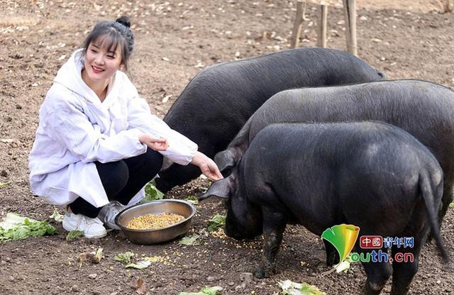 """Sợ con gái ế, ông bố hứa tặng 300 con lợn cho chàng rể tương lai, cộng đồng mạng thắc mắc """"Gái xinh thế này mà còn sợ"""""""