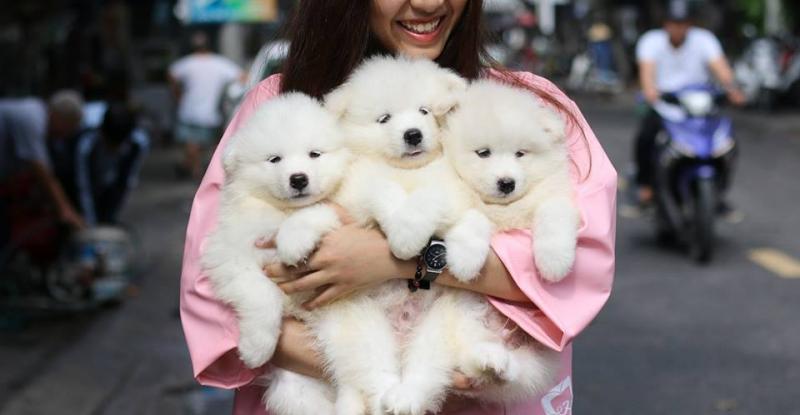 Top 6 Quán cafe thú cưng thú vị nhất ở Đà Nẵng