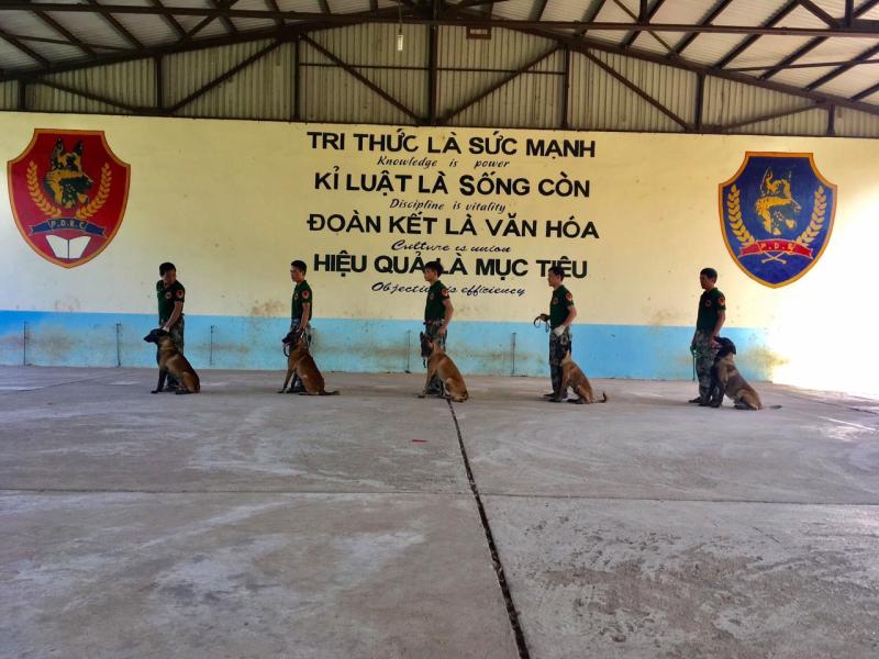 Top 6 Trung tâm huấn luyện chó uy tín và chuyên nghiệp nhất Hà Nội