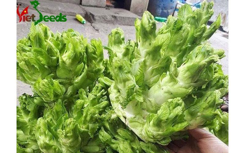 Top 9 Công ty cung cấp hạt giống uy tín và chất lượng nhất ở Việt Nam