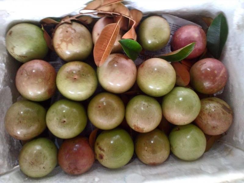 Top 18 Loại trái cây đặc sản nổi tiếng nhất Việt Nam