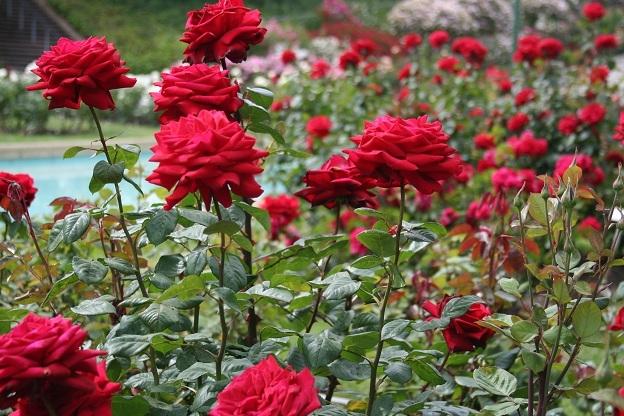 Top 12 Bài văn tả cây hoa hay nhất