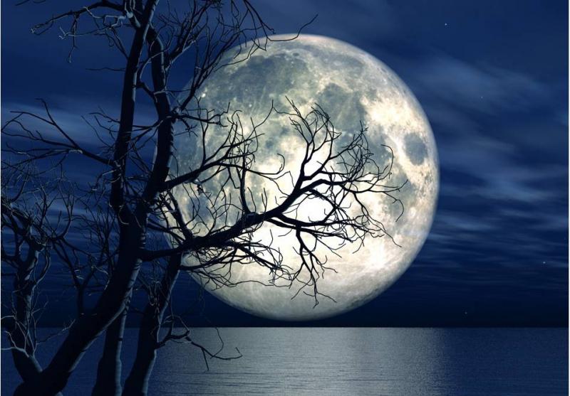 Top 8 Bài văn Cảm nhận vẻ đẹp tâm hồn của Bác qua bài thơ Ngắm trăng (Ngữ văn 8) hay nhất
