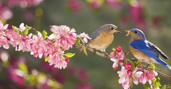 Top 7 Bài văn Phân tích khổ 2 và 3 bài thơ Mùa xuân nho nhỏ (Thanh Hải) (Ngữ văn 9) hay nhất