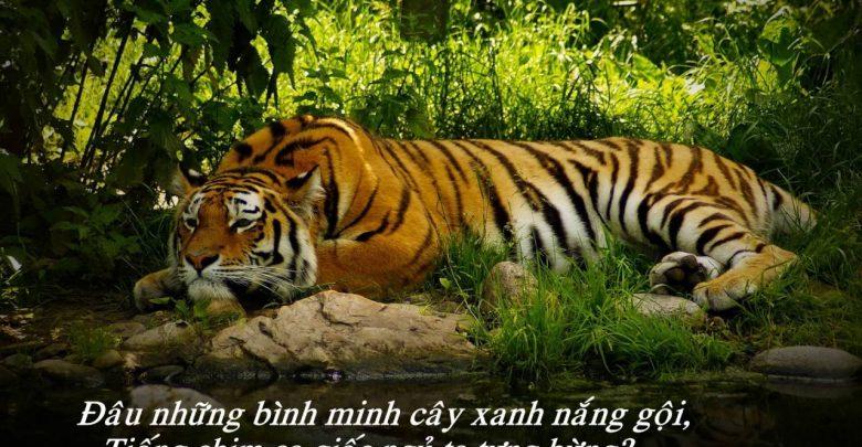 Top 5 Bài văn Phân tích bức tranh tứ bình trong bài thơ Nhớ rừng (Thế Lữ) (Ngữ văn 8) hay nhất