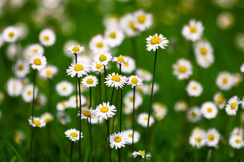Top 12 Bài thơ hay về hoa cúc
