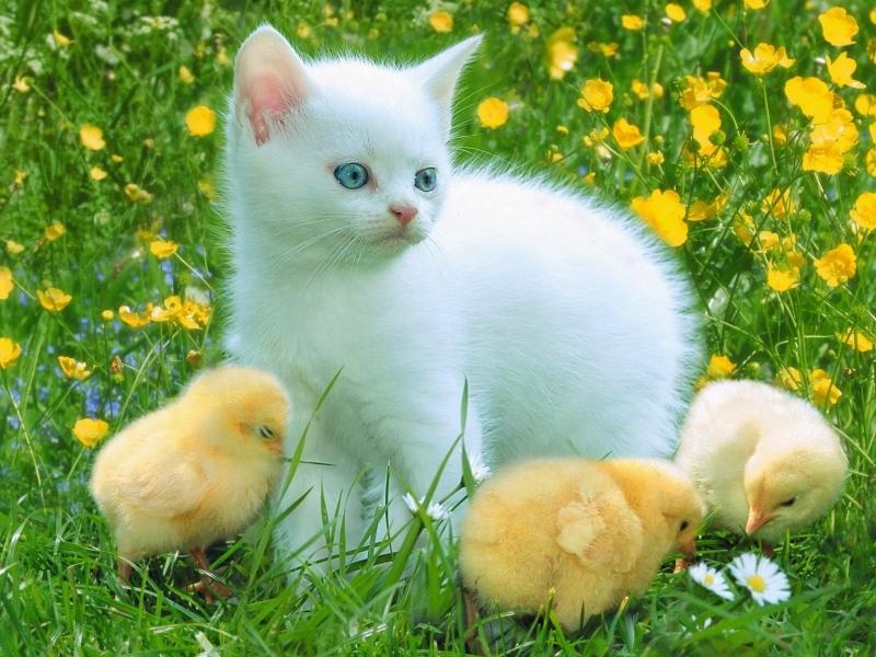 Top 15 Bài văn tả con mèo hay nhất