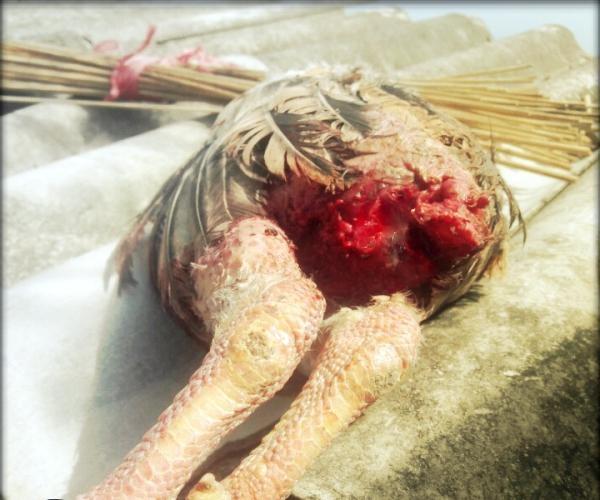 Top 8 Bệnh thường gặp nhất ở gà và cách phòng chống, chữa trị hiệu quả