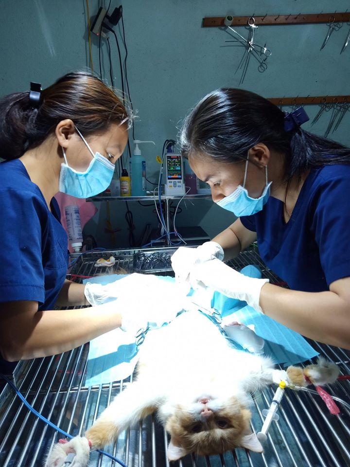 Top 7 Phòng khám thú y uy tín nhất tại Huế