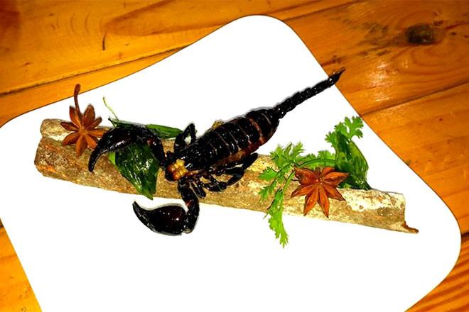 Top 10 Loại côn trùng có thể ăn được