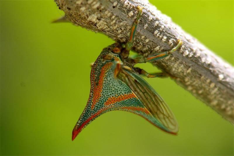Top 10 Sinh vật có hình thù kỳ lạ và đẹp nhất trong thế giới tự nhiên