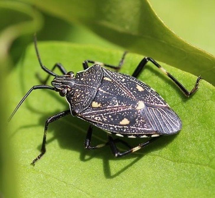Top 5 Con bọ và nhện chúng ta không nên giết hại