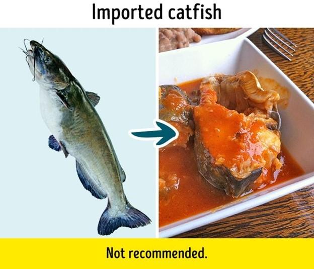Top 9 Loại cá bạn không nên ăn nhiều