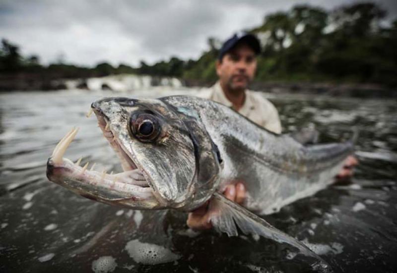 Top 12 Loài cá khổng lồ đang có nguy cơ bị tuyệt chủng