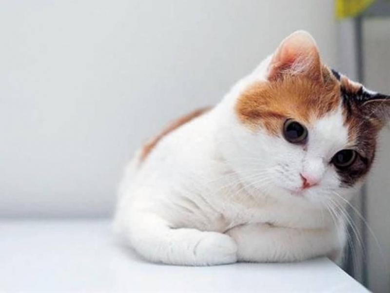 Top 7 Bí mật thú vị của loài mèo