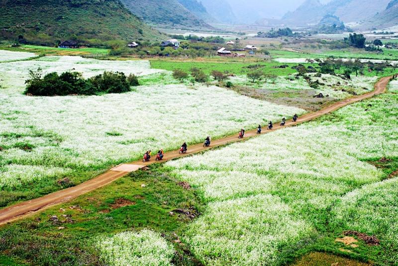 Top 13 Cánh đồng hoa đẹp nhất ở Việt Nam có thể bạn muốn biết