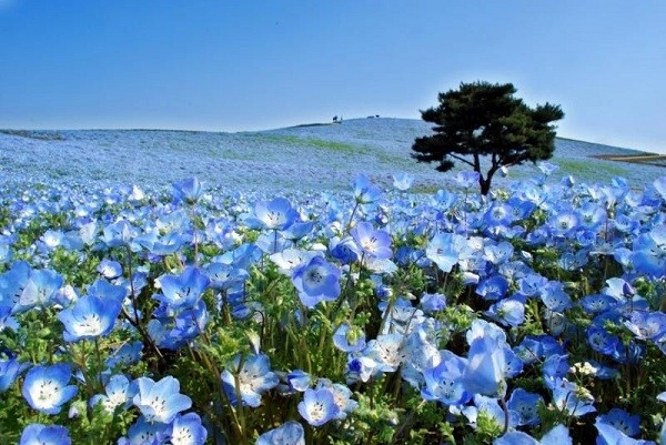 Top 10 Vườn hoa đẹp nhất thế giới bạn nên đến một lần trong đời
