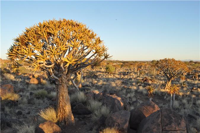 Top 10 Loại cây kì lạ nhất trên thế giới