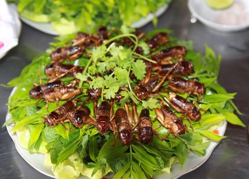 Top 13 Món ăn từ côn trùng lạ nhất Việt Nam