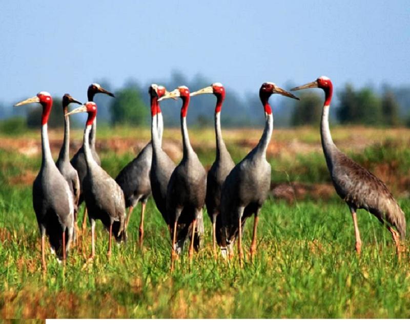 Top 10 Loài chim quý hiếm nhất thế giới