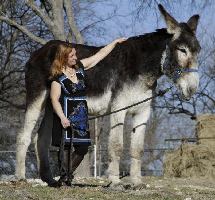 Top 10 Loài động vật đạt kỷ lục thế giới