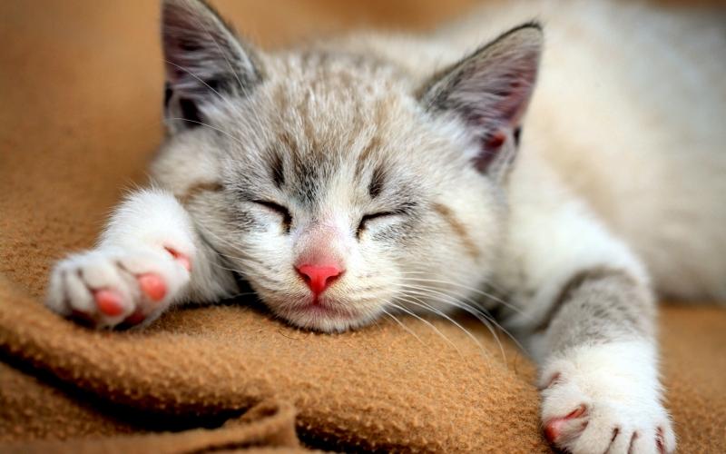 Top 10 Bài văn tả con vật hay nhất